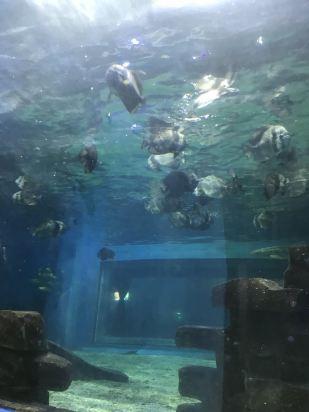 壁纸 海底 海底世界 海洋馆 水族馆 309_412 竖版 竖屏 手机