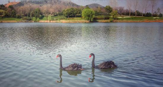 南京汤山紫清湖生态旅游温泉度假区