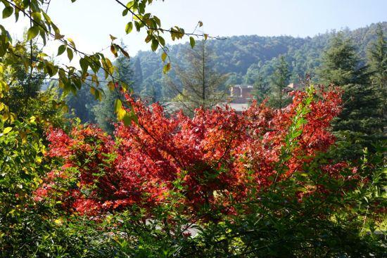 安宁金方森林温泉半山酒店