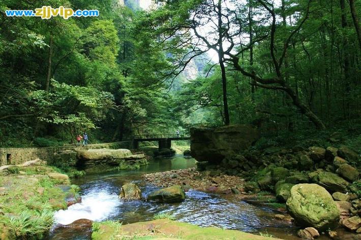 正如刘导说的,金鞭溪风景区是一块天然的氧吧,我们刚走入溪口就感受到