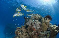 大堡礁-昆士兰-SASADING88